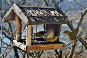 Bird feeders are probably the most popular and least expensive garden features.