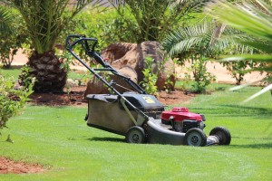 Some lawn mowers can bag the clippings