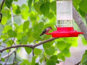 Hang your hummingbird feeder close for easy viewing