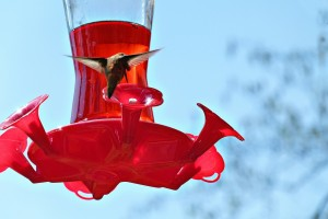 Hummingbird sipping from a hummingbird feeder