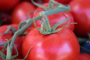 Red ripe bush tomatoes.