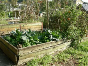 A homemade raised bed at a community garden.